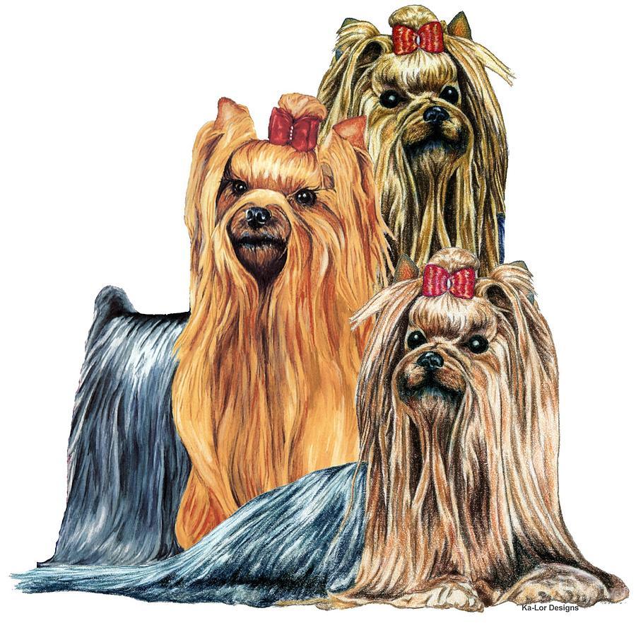 Yorkshire Terrier Drawing - Yorkshire Terriers by Kathleen Sepulveda