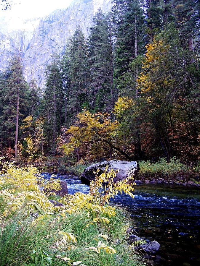 Yosemite Photograph - Yosemite 1 by Vijay Sharon Govender
