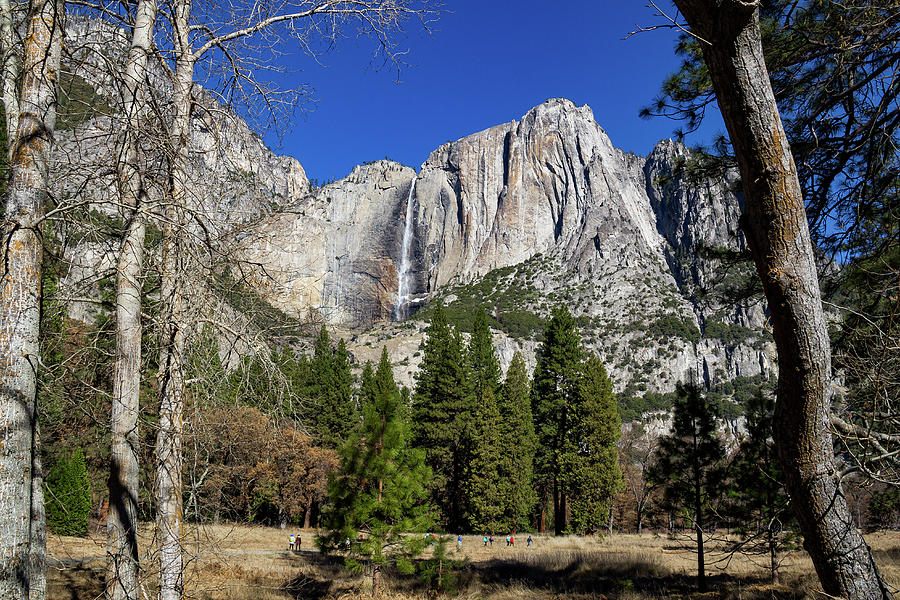 California Photograph - Yosemite Falls Through The Trees by Roslyn Wilkins