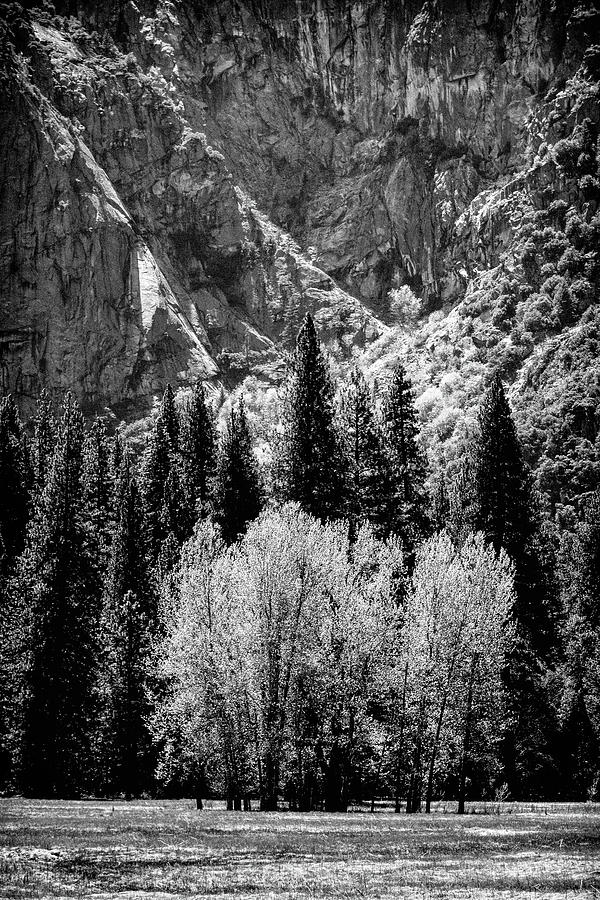 Yosemite Photograph - Yosemite Meadow In Black And White by Jan Hagan