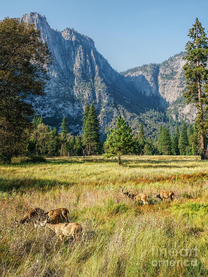 Yosemite Valley At Yosemite National Park Photograph