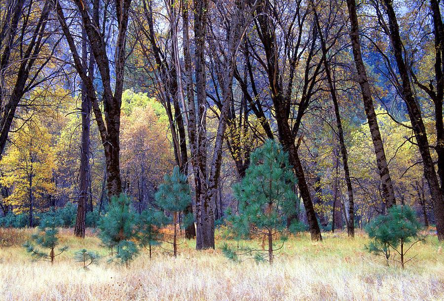 California Photograph - Yosemite Valley by Eric Foltz