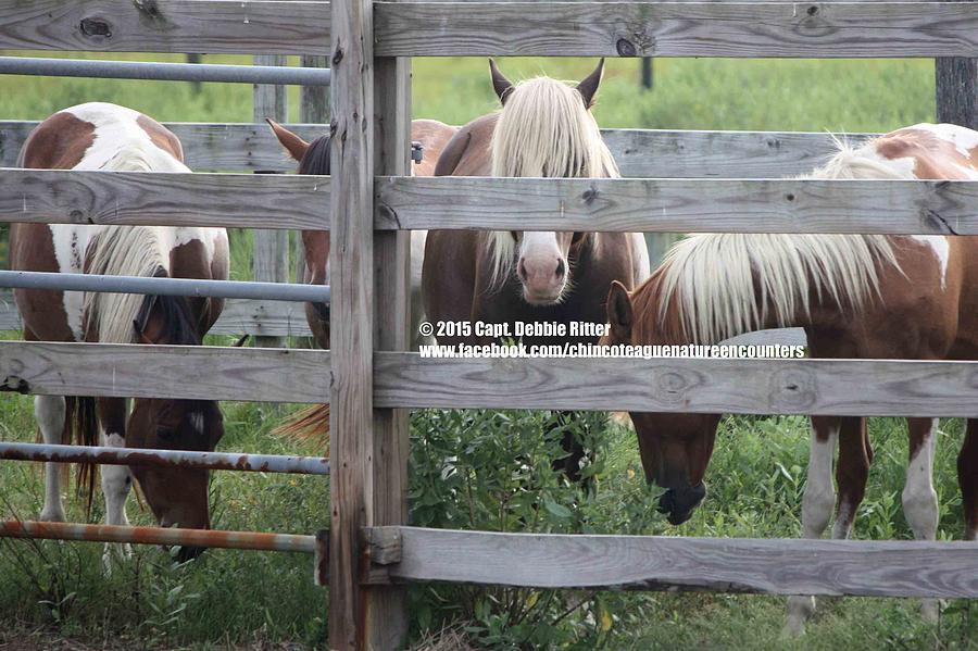 Stallion Photograph - You Again by Captain Debbie Ritter