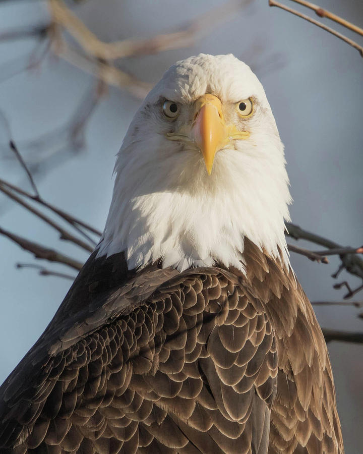 Eagle Photograph - You Again by Rhoda Gerig