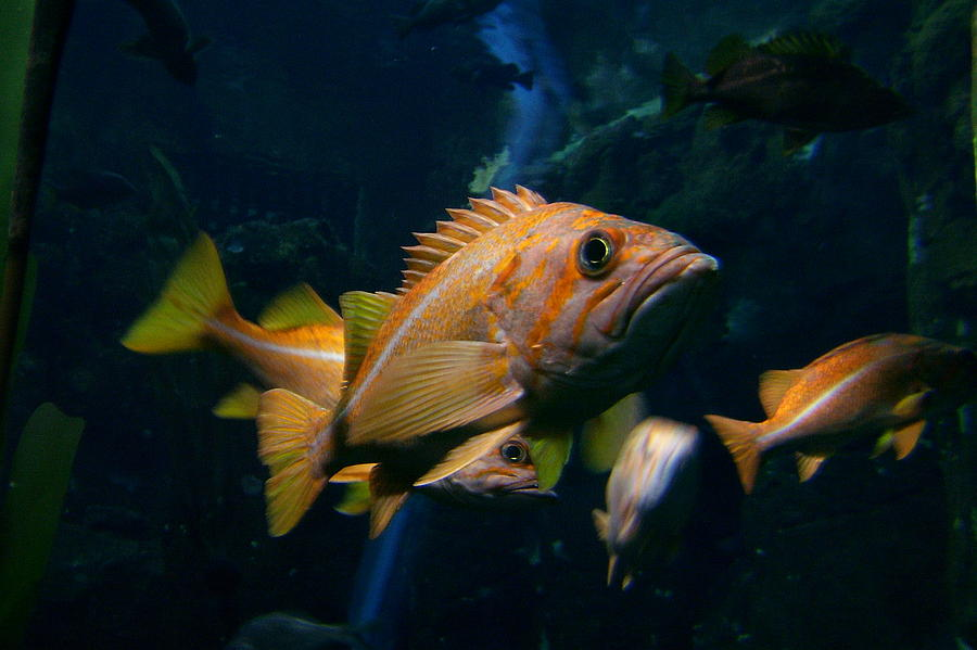 Fish Photograph - You Lookin At Me by Garry Kaylor
