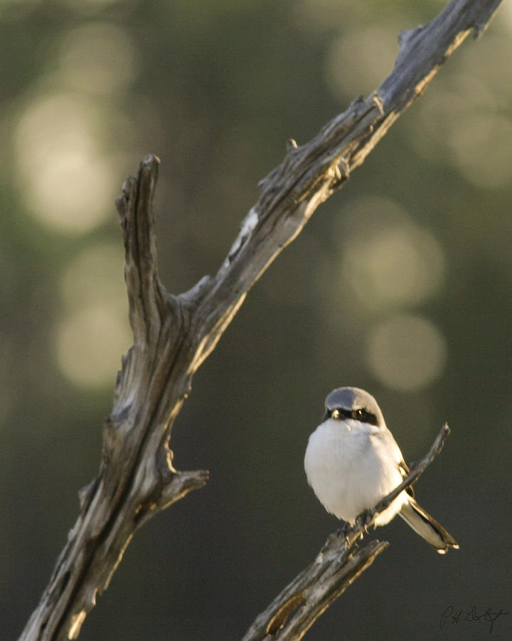 Bird Photograph - You Lookin At Me by Phill Doherty