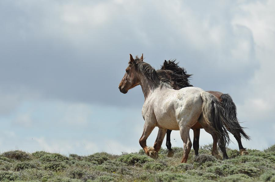 Wild Horses Photograph - You Will Never Catch Us by Frank Madia