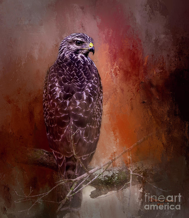 Hawk Photograph - Young Blood by Marvin Spates