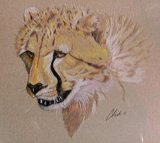 Nature Drawing - Young Cheetah by Ken Clark