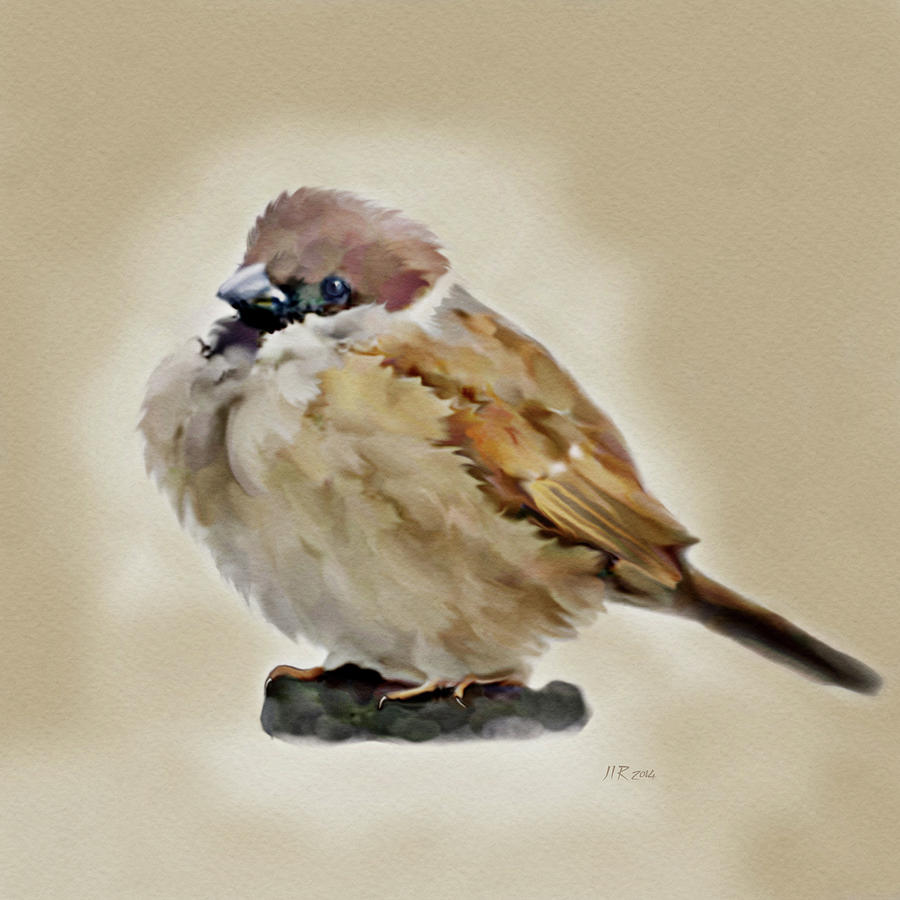 Birds Painting - Young House Sparrow by Bamalam  Photography