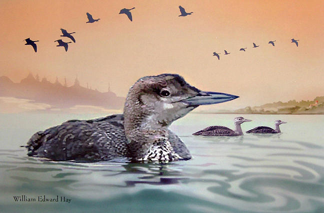 Lake Digital Art - Young Loon On Lake by William Hay