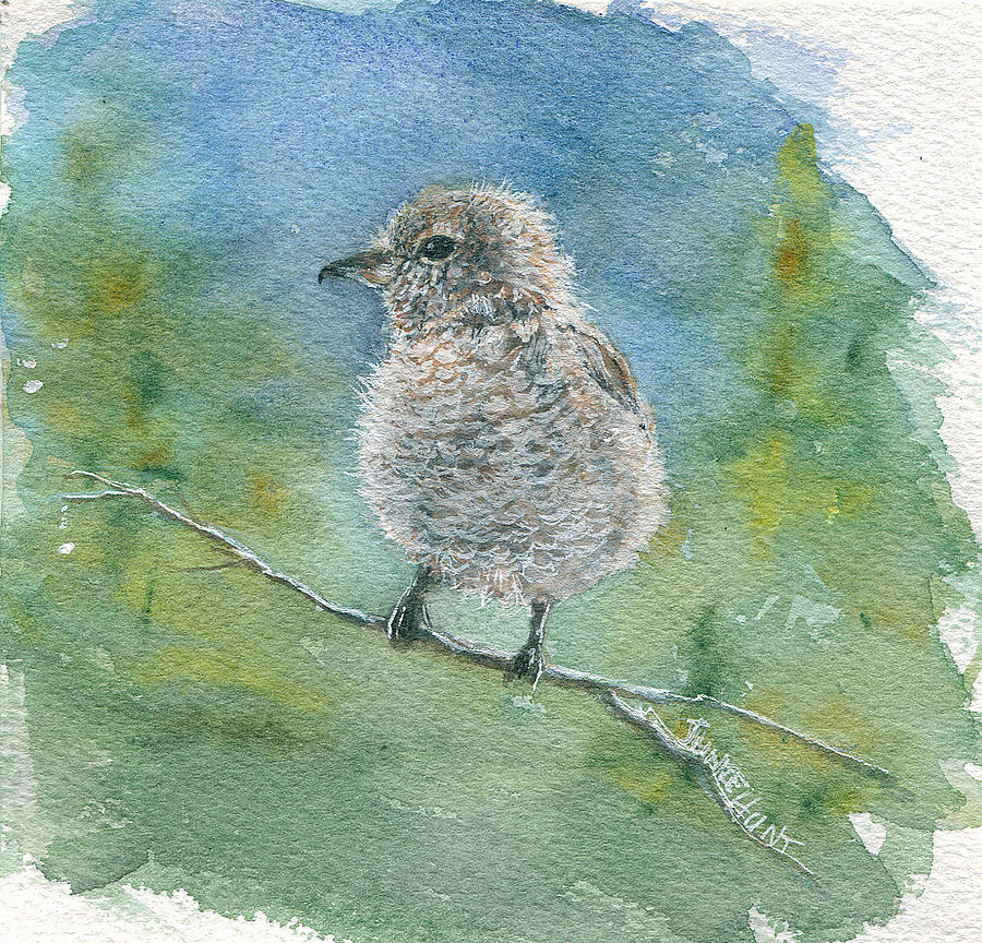 Birds Painting - Young Northern Shrike by June Hunt