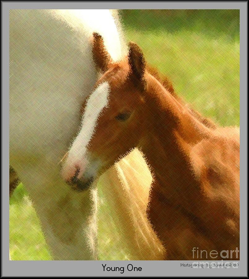 Horse Photograph - Young One by Randy Ricketts