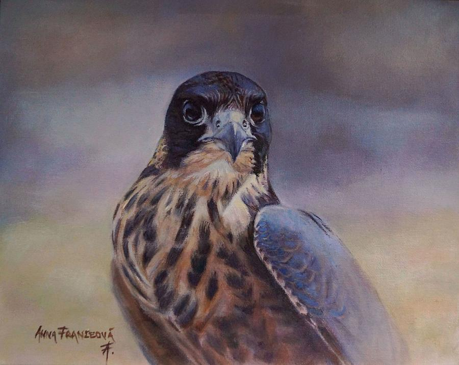 Falconry Painting - Young peregrine falcon by Anna Franceova