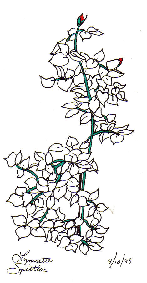 Young Rose Bush Drawing by Lynnette Jones
