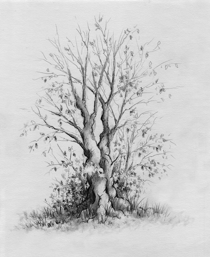 Pencil Drawing - Young Tree by Rachel Christine Nowicki
