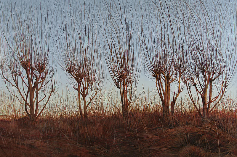 Light Painting - Young Willows by Alan  Bateman