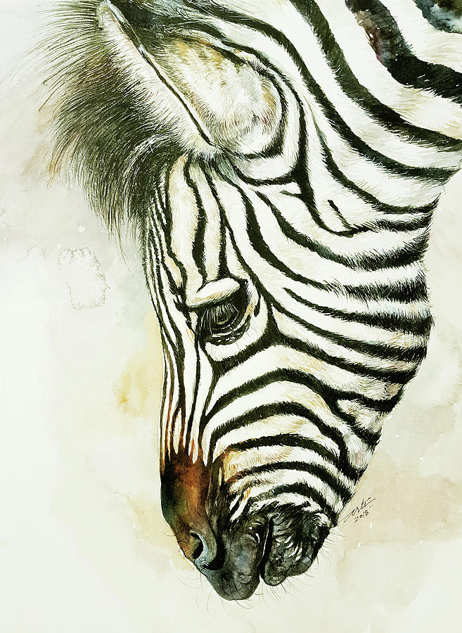 Young Zebra Becky by Arti Chauhan