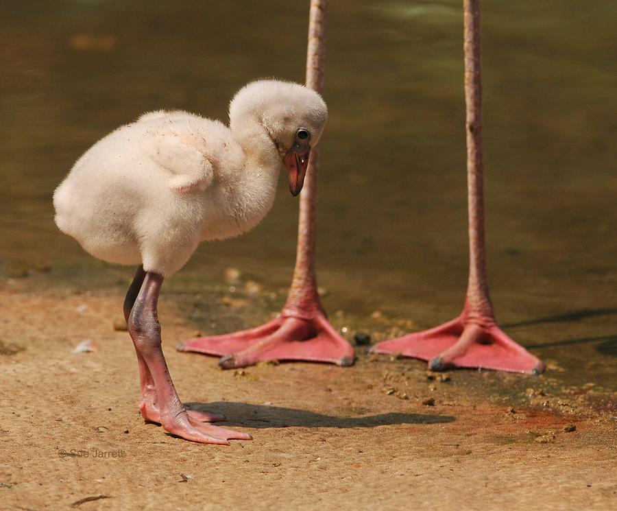 Your Feet Are Bigger by Sue Jarrett
