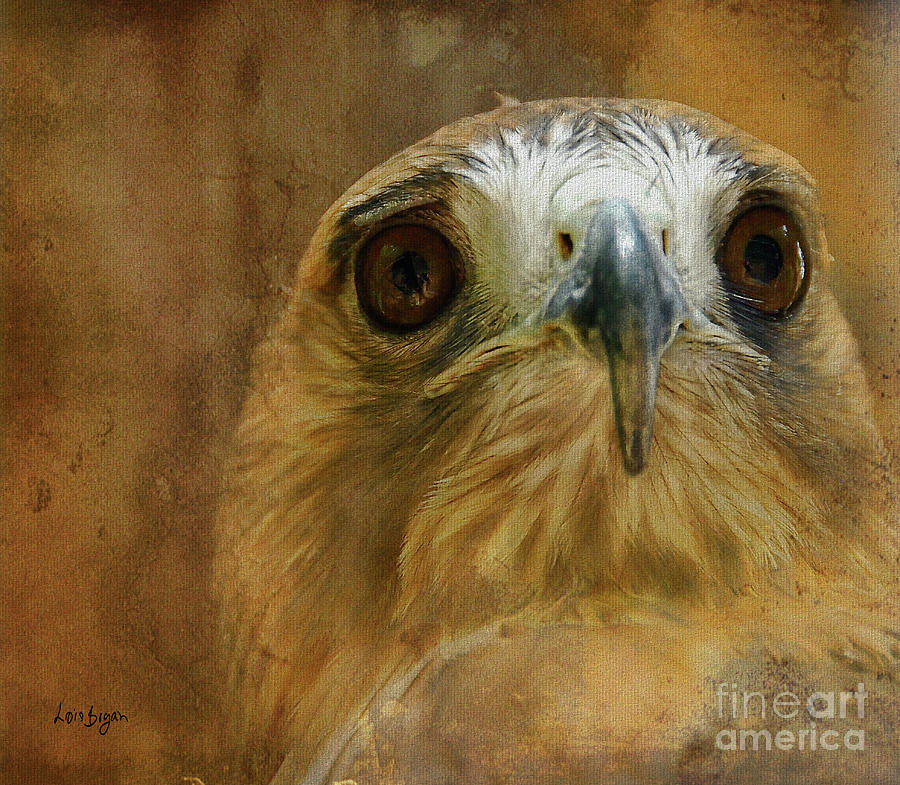 Hawk Photograph - Your Majesty by Lois Bryan