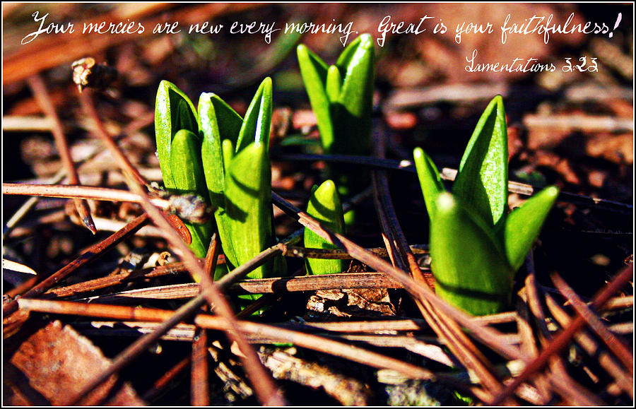 Mercy Photograph - Your Mercies Are New by Elizabeth Babler
