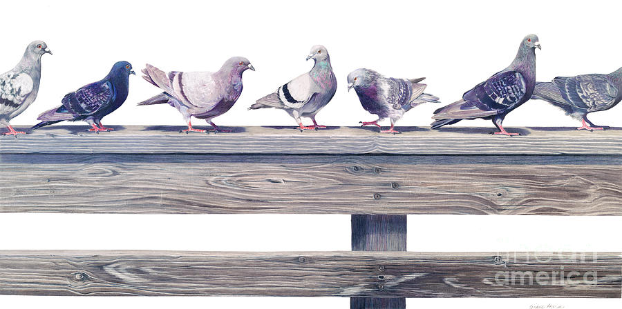 Pigeons Painting - Your Other Left by Diane Harm