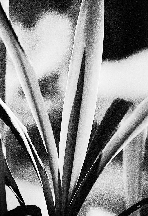 Black And White Photograph - Yucca by Gerlinde Keating - Galleria GK Keating Associates Inc