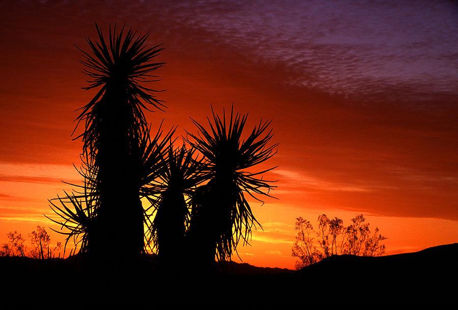 California Photograph - Yucca Sunrise by Eric Foltz
