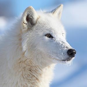 Yukon Canada Photograph by Cristy Simmons - Willett