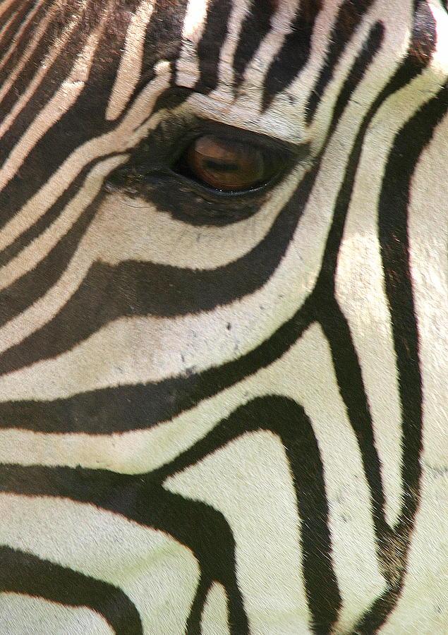 Zebra Photograph - Z-eye by Donald Tusa