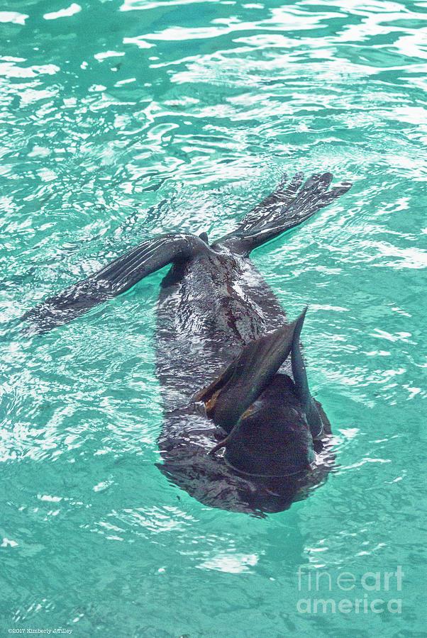 Sea Lion Photograph - Zalophus  by Kimberly Tilley