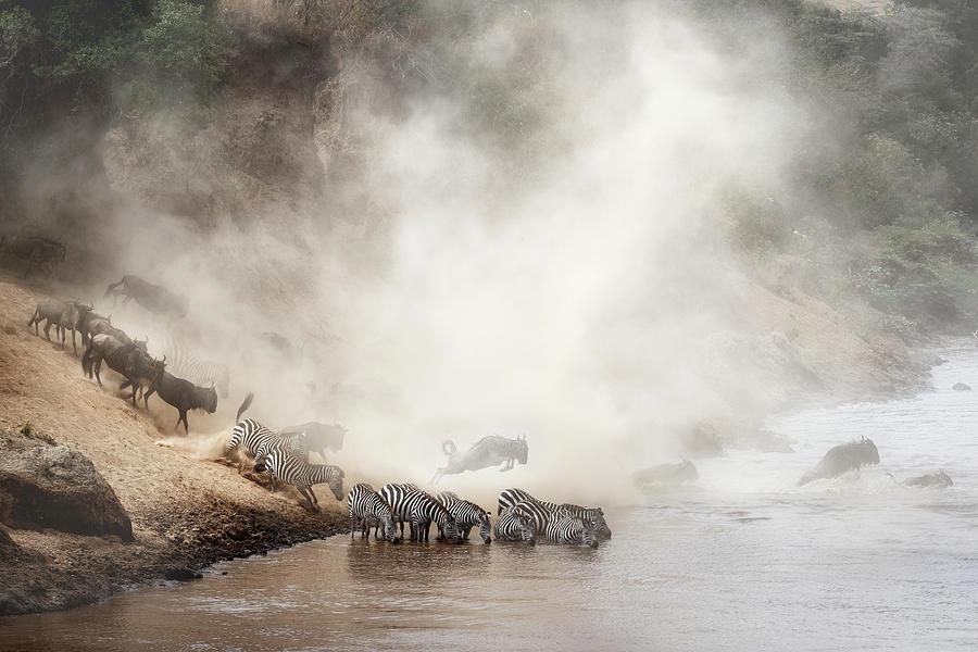 Wildlife Photograph - Zebra And Wildebeest Migration In Africa by Susan Schmitz