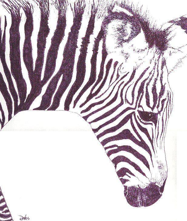 Zebra Painting - Zebra Colt by Debra Sandstrom