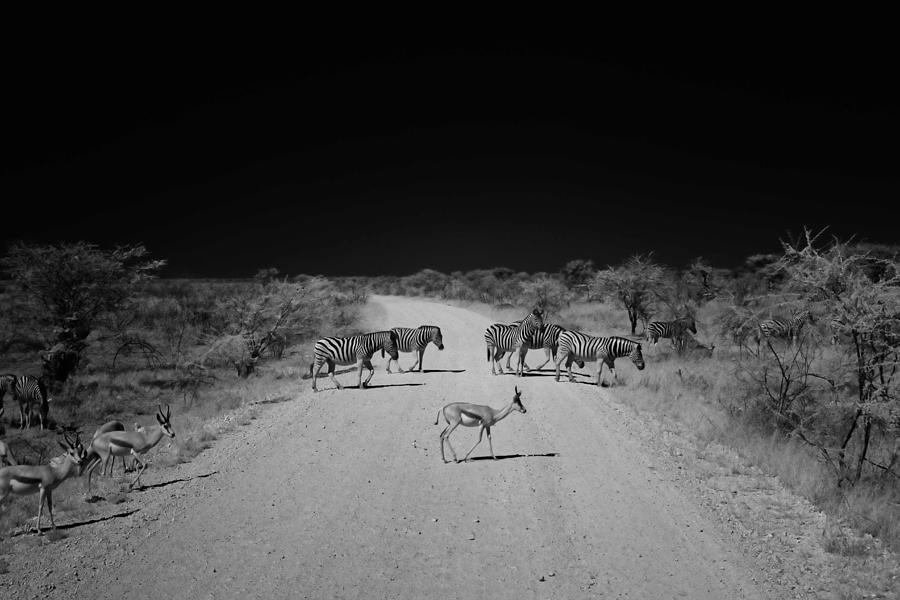 Namibia Photograph - Zebra Crossing by Sander Hunter