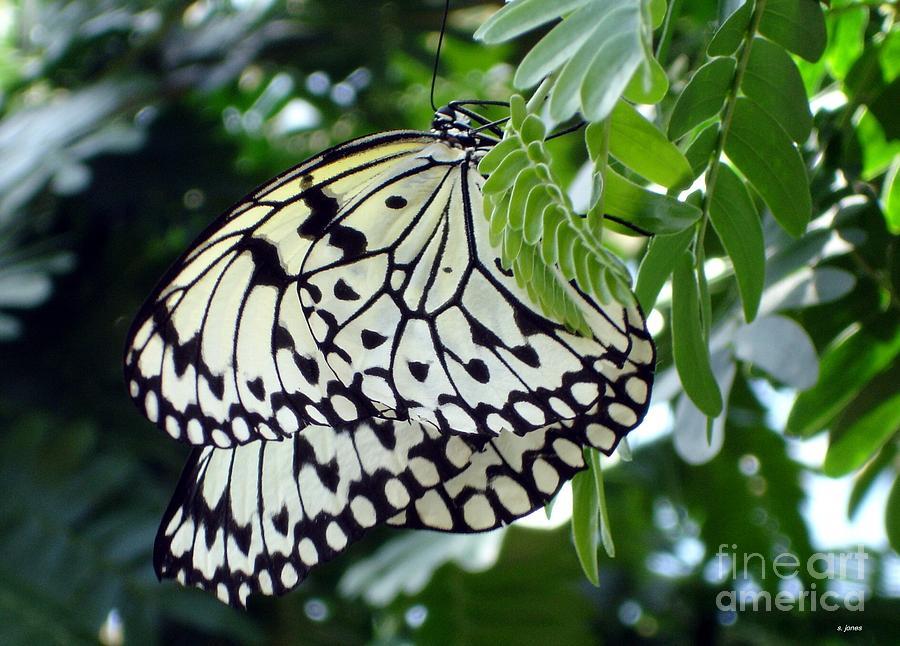 Butterfly Photograph - Zebra In Disguise by Shelley Jones