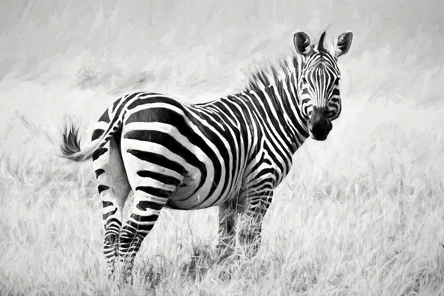 Zebra Digital Art - Zebra In The African Savanna by Pravine Chester