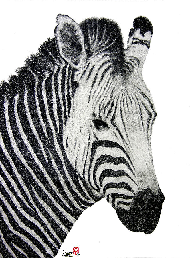 Zebra Drawing - Zebra by Joung Sik Chun