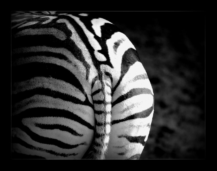 Safari Digital Art - Zebra by Lynda Art