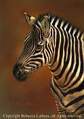 Zebra Painting - Zebra Portrait by Rebecca Latham