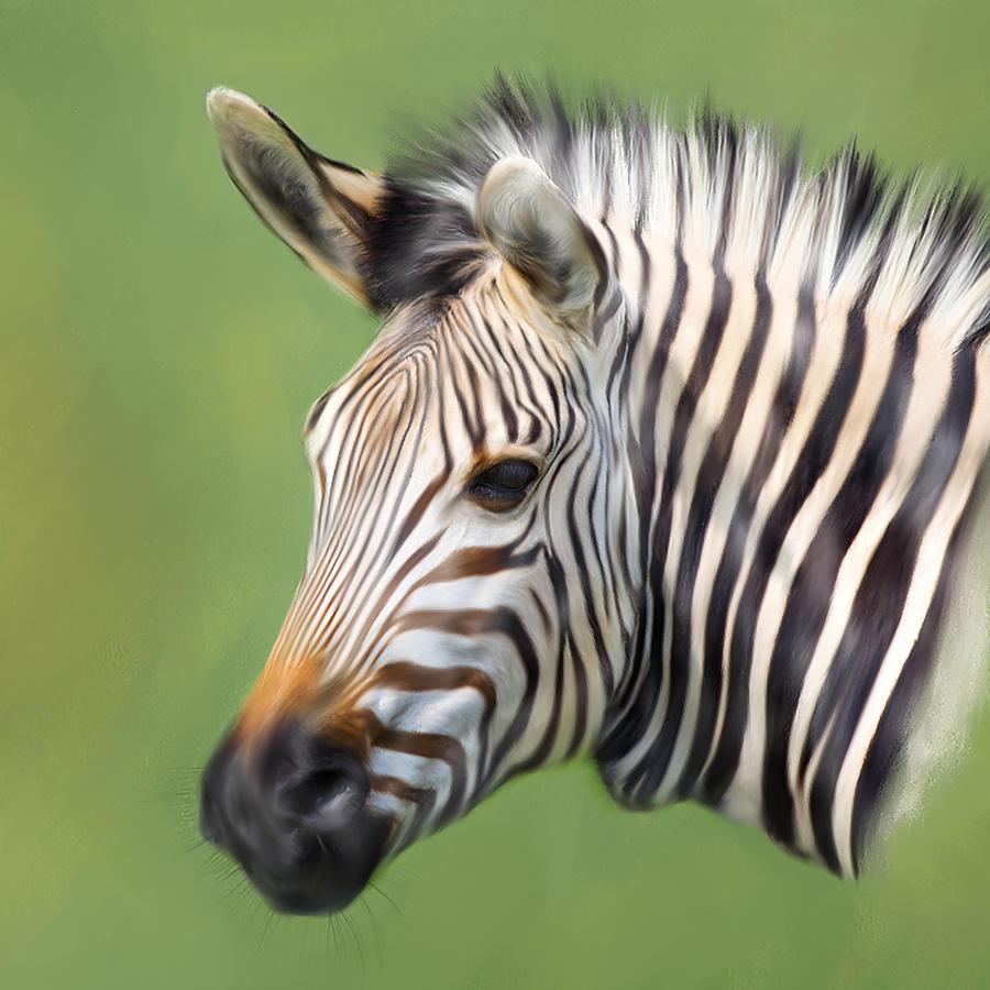 Trevor Digital Art - Zebra Portrait by Trevor Wintle
