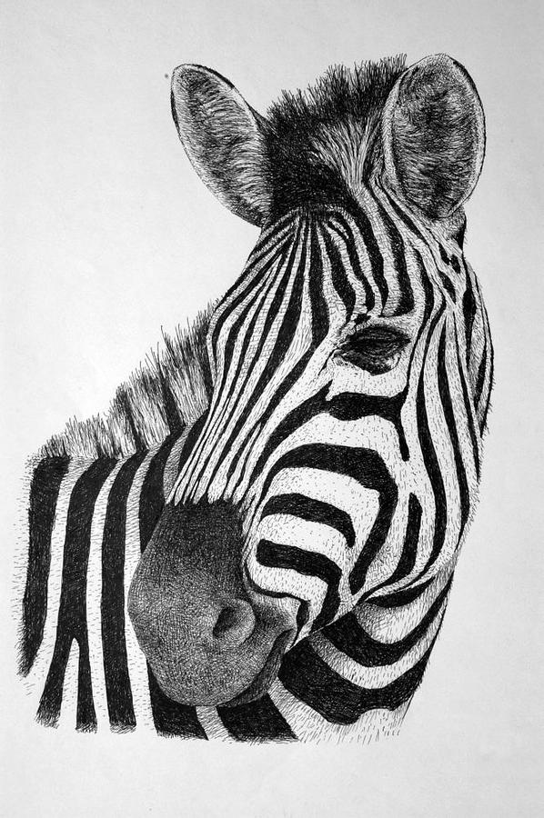 Zebra Drawing By Rens Ink