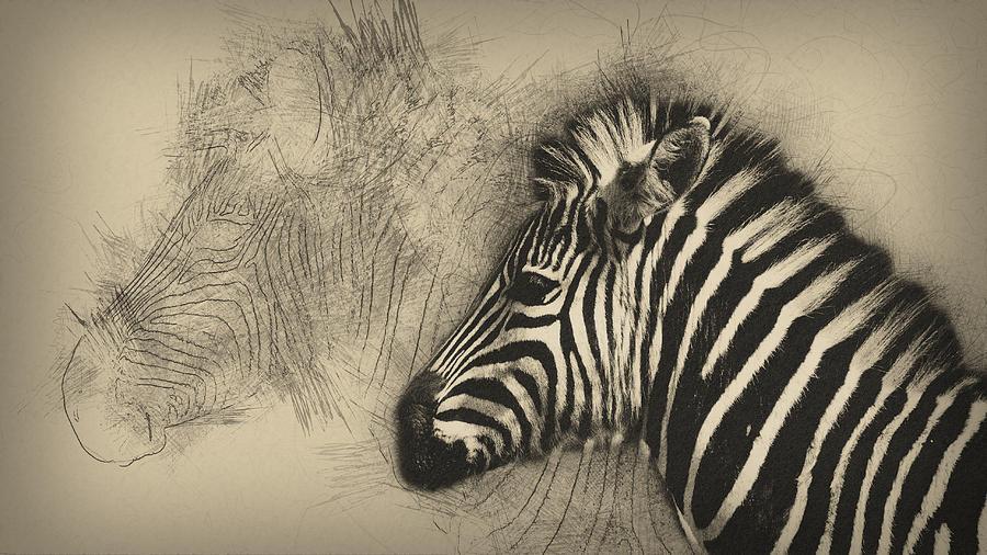 Animal Digital Art - Zebra Study by Peggy Kellogg