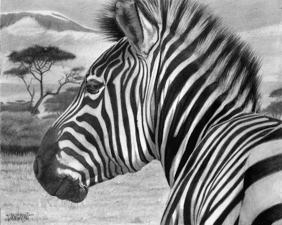 Zebra Drawing by Tim Dangaran