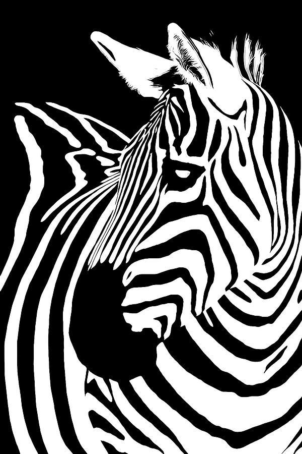 Zebra Digital Art - Zebra Works by Janet Fikar