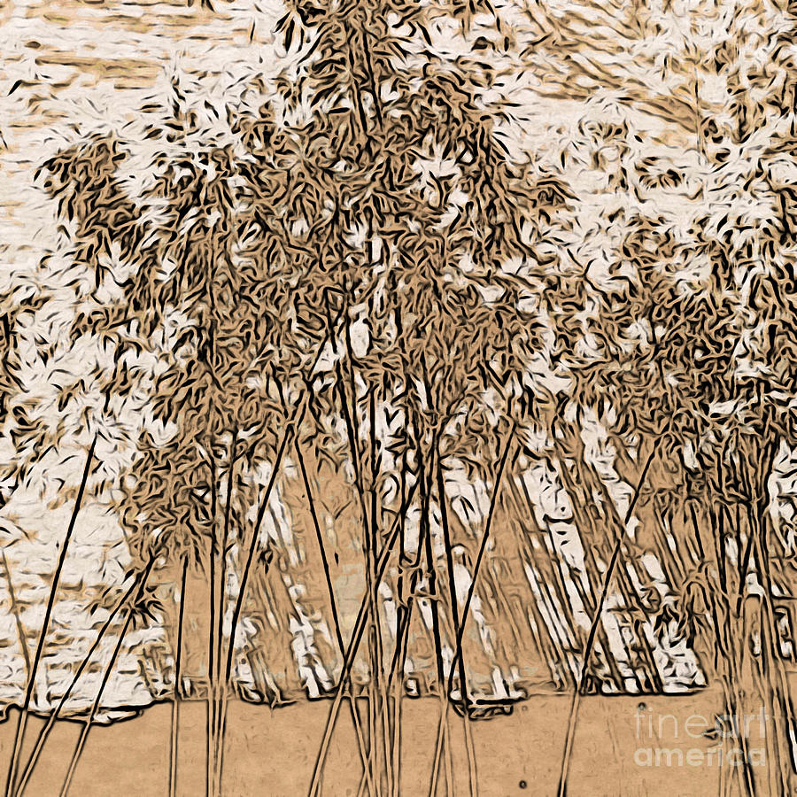 Zen Bamboo Garden by Onedayoneimage Photography