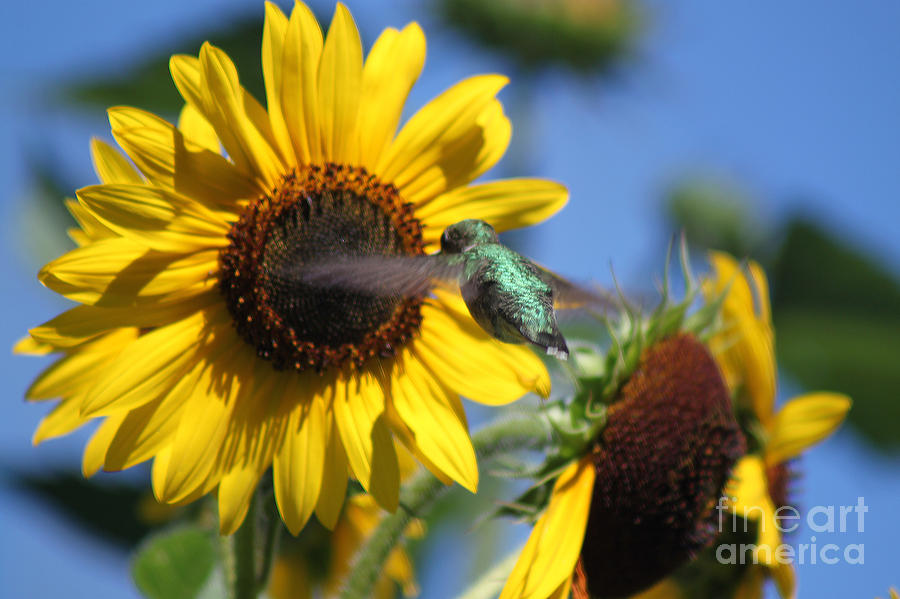 Yellow Photograph - Zeroing In On The Subject Matter by Cathy  Beharriell