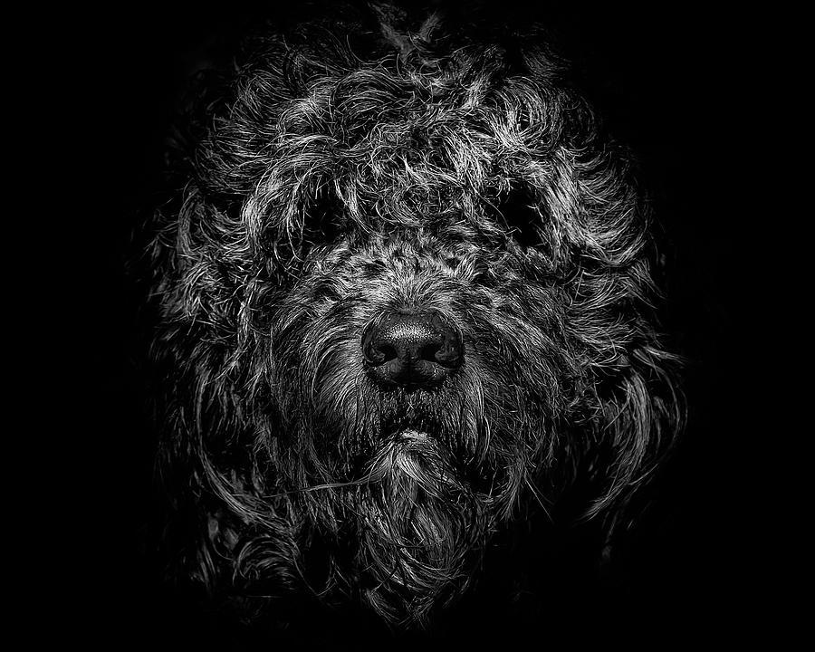 Brian Carson Photograph - Ziggy Portrait No 1 by Brian Carson
