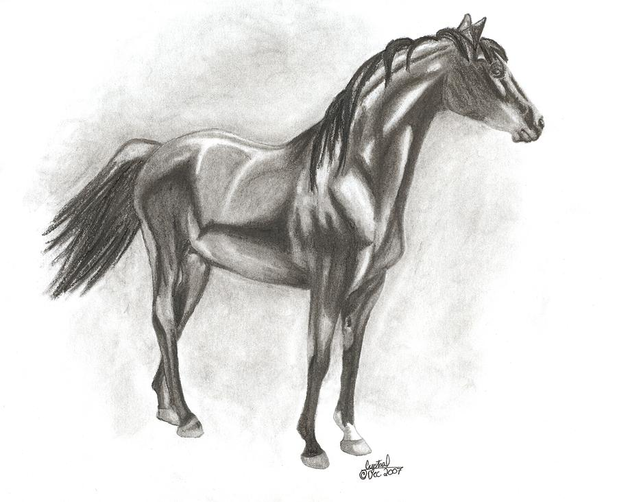 Zimmy Drawing by Crystal Suppes