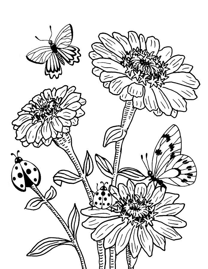 Zinnia And Butterflies Drawing Drawing By Irina Sztukowski