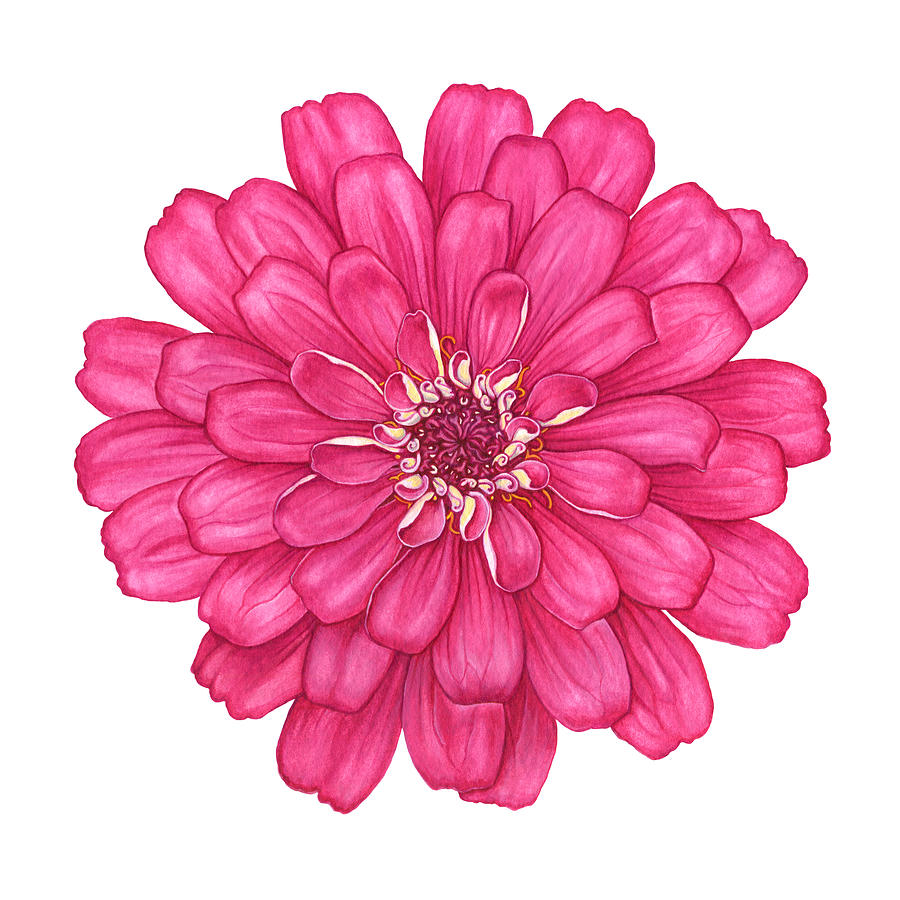 Zinnia Painting - Zinnia In Pink by Suzannah Alexander